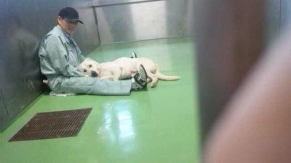 保健所の職員さんと犬
