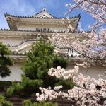 カップルにおすすめ!桜のお花見デート人気ランキング10in四国