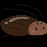 エアコンからゴキブリ!?原因と対策―簡単な方法で虫の侵入を防ごう