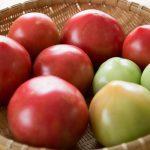 スギ花粉症の人は食物アレルギーにも要注意!なぜ生トマトで症状悪化?